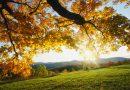 शरद ऋतूतील आरोग्यदायी आहार