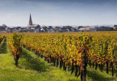 वाईनच्या माहेरघरी जगाच्या पाठीवर